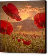 A Poppy Kind Of Morning Canvas Print by Debra and Dave Vanderlaan
