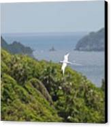 A Red-billed Tropicbird (phaethon Canvas Print by John Edwards