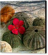 A Soft Touch Canvas Print