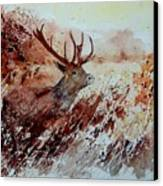 A Stag Canvas Print