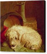 A Terrier Canvas Print