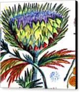 A Thistle Canvas Print