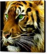 A Tiger's Stare Canvas Print by Ricky Barnard