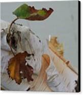 A Touch Of Fall Canvas Print