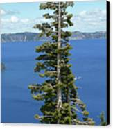 A Tree With A View Canvas Print by Methune Hively