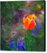 A Tulip Stands Alone Canvas Print