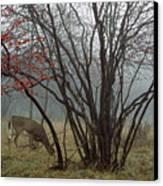A White-tailed Deer Forages Canvas Print by Raymond Gehman