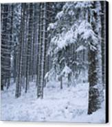 A Winter View Of The Canvas Print by Taylor S. Kennedy