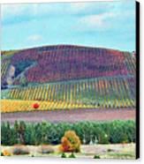 A Yamhill Co. Vineyard Canvas Print by Margaret Hood