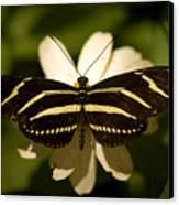 A Zebra-winged Butterfly At The Lincoln Canvas Print by Joel Sartore