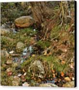 Acadia Fall Foliage Canvas Print
