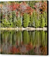 Acadia Tree Reflections Canvas Print