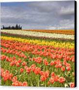 Across Colorful Fields Canvas Print by Mike  Dawson
