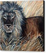 African Lion 2 Canvas Print by Nick Gustafson