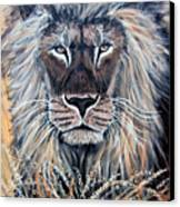 African Lion Canvas Print by Nick Gustafson