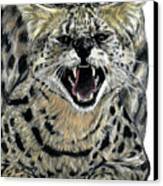 African Serval Canvas Print