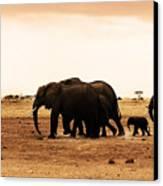 African Wild Elephants Canvas Print by Anna Om