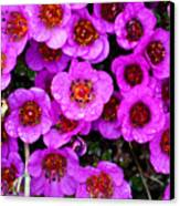 Alaskan Wild Flowers Canvas Print