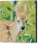 Alert Fawn Canvas Print