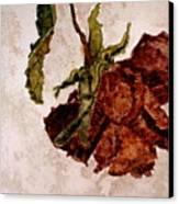 Alices Rose - Watercolor Canvas Print