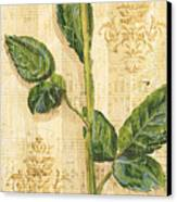 Allie's Rose Sonata 2 Canvas Print by Debbie DeWitt