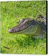 Alligator Up Close  Canvas Print by Allen Sheffield