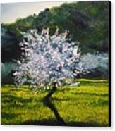 Almond Tree In Blossom Canvas Print