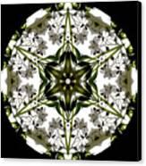 Alstroemeria Wild 1 Canvas Print