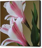 Alstroemerias - Doubled Canvas Print