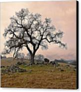 Amador Oak Canvas Print
