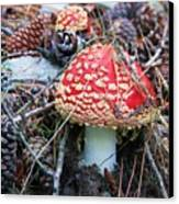 Amanita Mushroom Canvas Print by Michele Penner