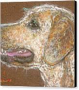 Amber Canvas Print by Suzie Majikol Maier