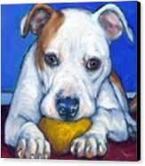 American Bulldog With Yellow Ball Canvas Print