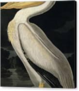 American White Pelican Canvas Print by John James Audubon