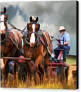 Amish Farmer Canvas Print by Tom Griffithe