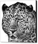 Amur Leopard Canvas Print by John Edwards
