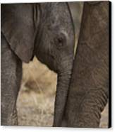 An Elephant Calf Finds Shelter Amid Canvas Print