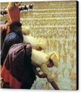 An Italian Rice Field Canvas Print