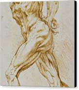 Anatomical Study Canvas Print by Rubens