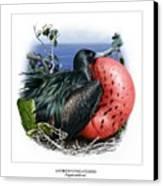 Andrews Frigatebird Fregata Andrewsi 3 Canvas Print by Owen Bell