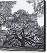 Angel Oak Canvas Print