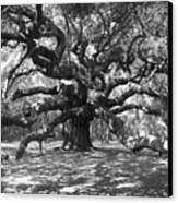Angel Oak Tree Black And White Canvas Print