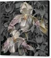 Angelic Hosts  The Hooded Nun Orchid Canvas Print