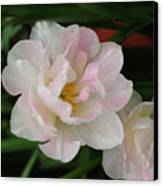 Angelique Tulips Canvas Print by Beverly Cazzell