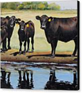 Angus Reflections Canvas Print by Toni Grote