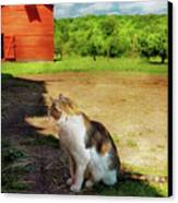 Animal - Cat - The Mouser Canvas Print