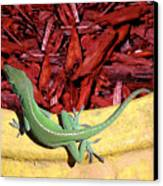 Anole Getting A Better Look Canvas Print