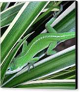 Anole Hiding In Spider Plant Canvas Print