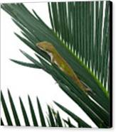 Anole With Palm - Coy Canvas Print