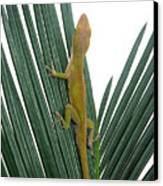 Anole With Palm - Curious Canvas Print